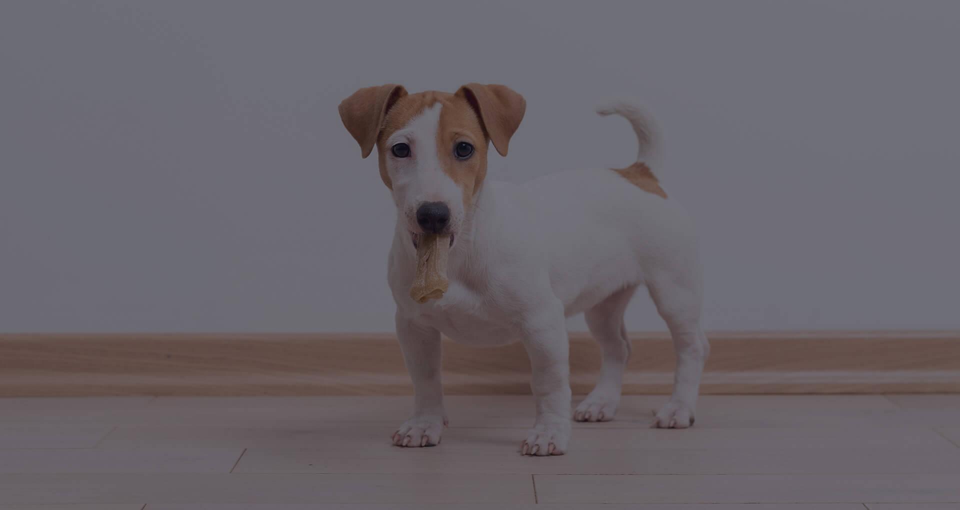 banner-gossos-onces